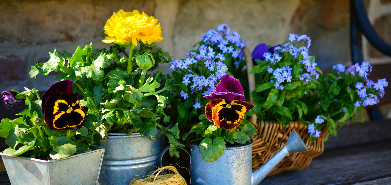 Découvrez l'association des arrosoirs et des fleurs !