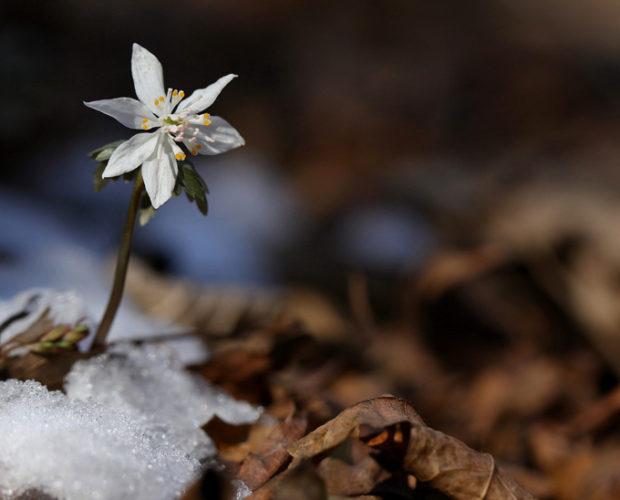 Découvrez notre nouvel article et sentez le printemps se glisser dans vos vies !